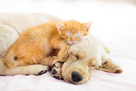 Foto de Cat and dog sleeping together. Kitten and puppy taking nap. Home pets. Animal care. Love and friendship. Domestic animals. - Imagen libre de derechos