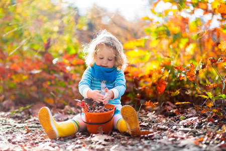 Foto de Girl holding acorn and colorful leaf in autumn park. Child picking acorns in a bucket in fall forest with golden oak and maple leaves. Children play outdoors. Kids playing and hiking in the woods. - Imagen libre de derechos