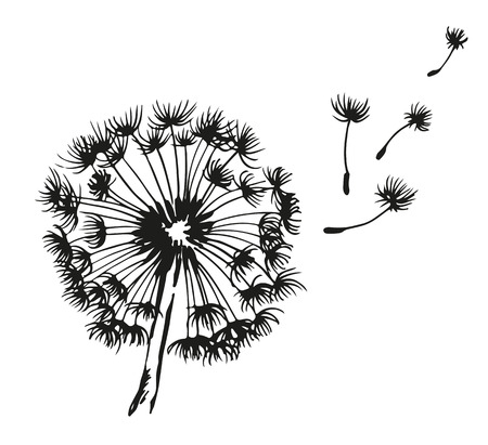 Illustration for Dandelion blowing hand drawn vector illustration, isolated on white background - Royalty Free Image