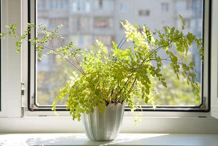 Window with flowerpot