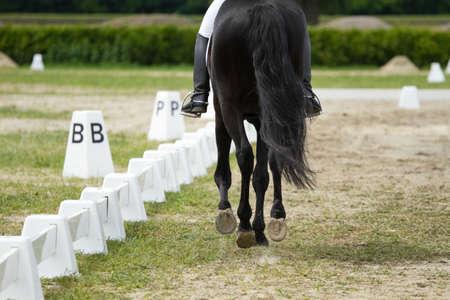 Photo pour Dressage horse and rider - image libre de droit