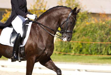 Photo pour Dressage horse and a rider - image libre de droit