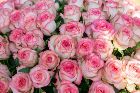 Photo for A large bouquet of pink roses. 100 or 1000 rose flowers - Royalty Free Image