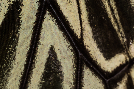 Butterfly wing pattern background