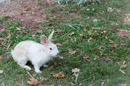 Wild rabbit in the nature background