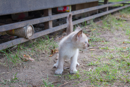 Young white kitten cat with blue eyes Lost on the park