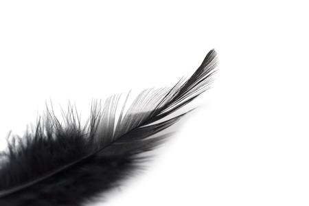 Close up Black feathers isolated on white background