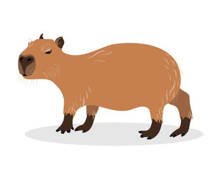 Illustration pour Capybara on a white background. Animals of South America. - image libre de droit