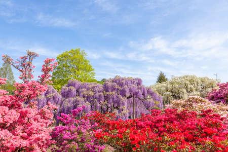 Photo pour Ashikaga flower park. - image libre de droit