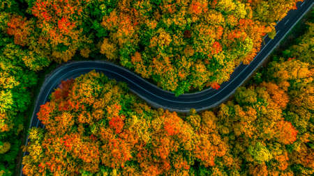 Photo pour Aerial view of thick forest in autumn with road cutting through it - image libre de droit