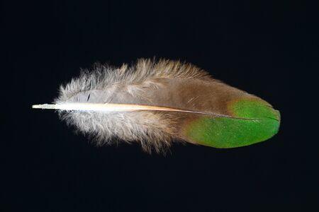 Feathercollector120200043