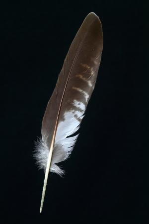 Feathercollector120200045