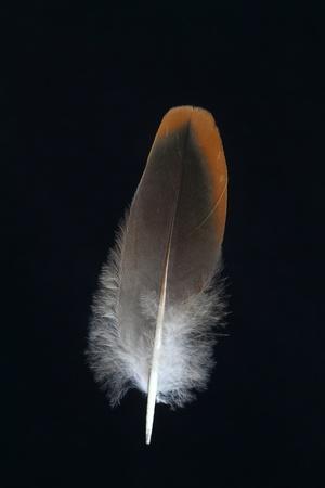 Feathercollector120200048