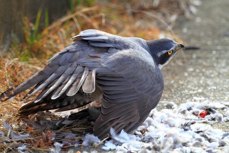 Feathercollector141000208