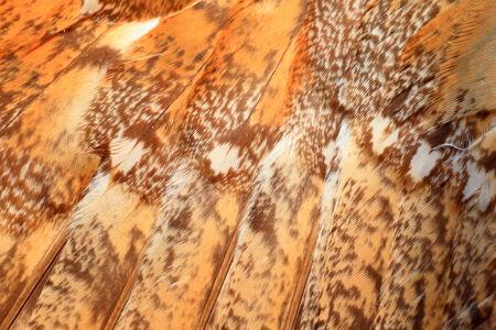 Feathercollector141100214