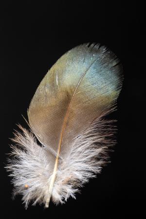 Feathercollector150400120
