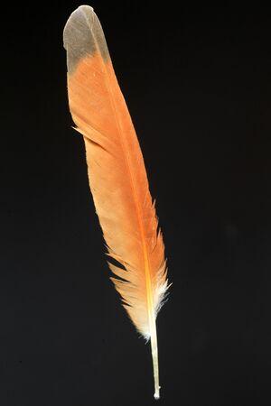 Feathercollector150400121