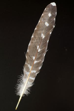 Feathercollector150400146
