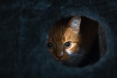 Foto de Portrait of cute red white cat hiding of black box. - Imagen libre de derechos