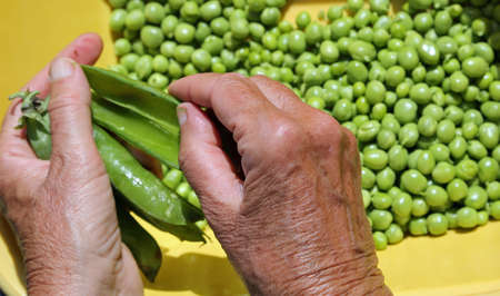 woman take off the green peas from pods
