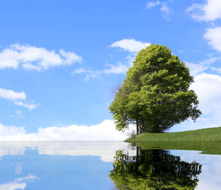 Green tree with the alpine lake and the thick foliage in summer