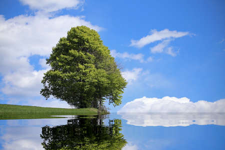 isolated tree with the alpine lake and the thick foliage in summer