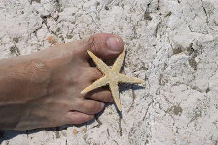 big foot barefoot of a young man and a big starfish on white rocks in summer