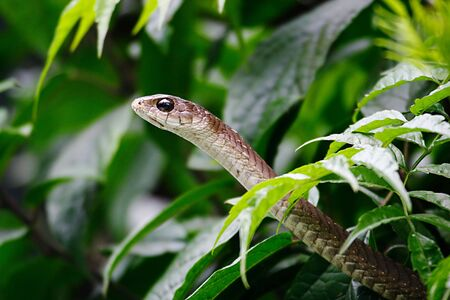 Foto per Snake coming out of a shrub - Immagine Royalty Free
