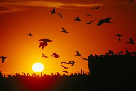 Foto per A wonderful sunset at Lambert's Bay, South Africa - Immagine Royalty Free