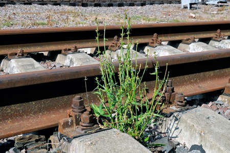 Green plant grows on the abandoned railroad.