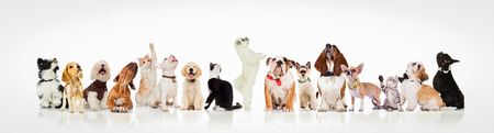 Photo pour large group of curious dogs and cats looking up at something on white background - image libre de droit