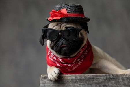 Foto de adorable pug laying down and resting on a wooden box, wearing a hat, a pair of sunglasses and a red bandana, looking to side on a grey background - Imagen libre de derechos