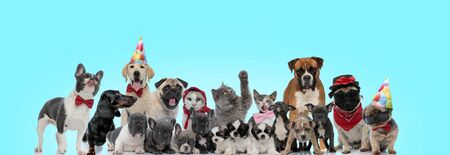 Photo pour group of happy dogs and cats standing together on blue background - image libre de droit