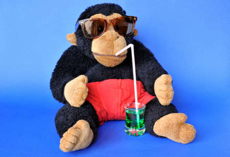 Funny scene: fluffy monkey with sunglasses sipping drink on blue