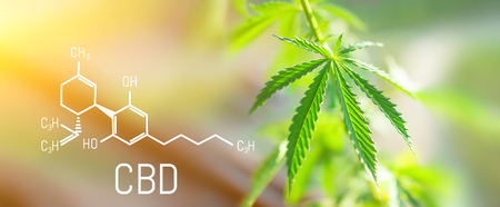 Photo for CBD Chemical Formula, Beautiful background of green cannabis flowers A place for copy space - Royalty Free Image
