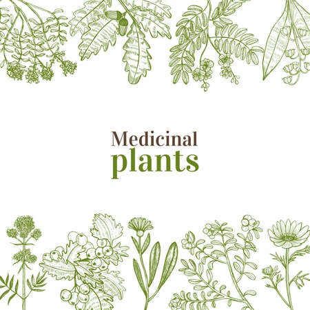 Illustration pour Template with Medicinal Plants. Floral Composition in Hand-Drawn Style for Banners Fliers Posters Surface Design Cosmetic. Vector Illustration - image libre de droit