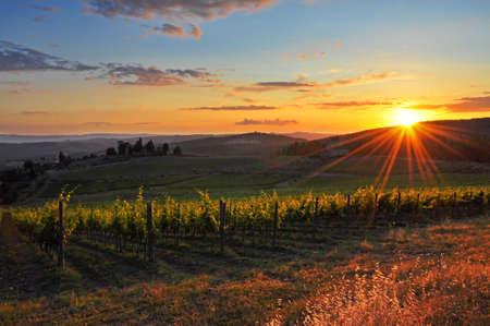Photo pour Tuscan vineyard - image libre de droit