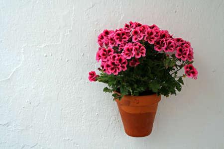 Flowerpot in a wall