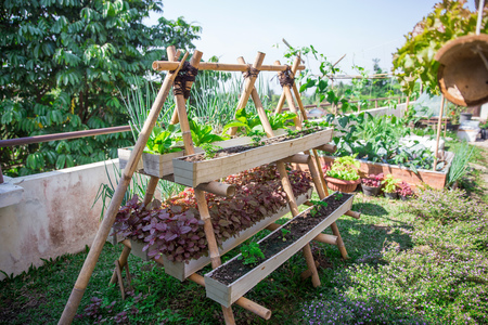 Photo pour potrait of modern home urban farming in the small space of the building rooftop - image libre de droit