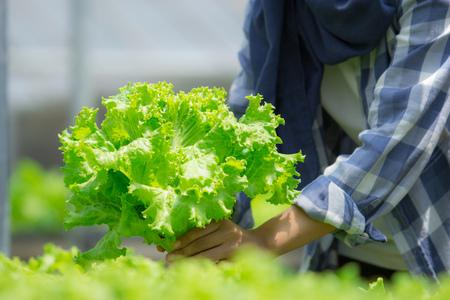 Foto für close up of hand harvesting vegetable - Lizenzfreies Bild