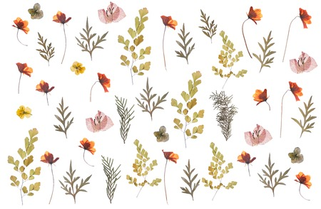 Foto de flat pressed dried flower pattern isolated on white background - Imagen libre de derechos