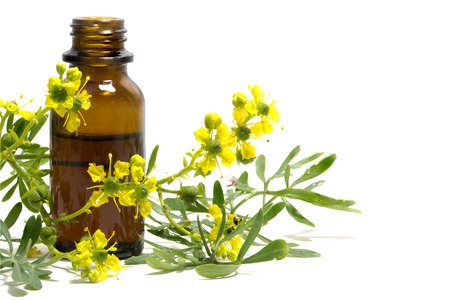 Rue (Ruta graveolens), branch with flowers and a bottle of essential oil isolated on a white background, old medical plant