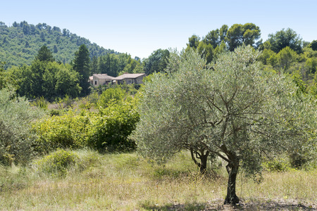Typical rural landscape in Provence with olive tree, country house and clad hills, south of France, Luberon region