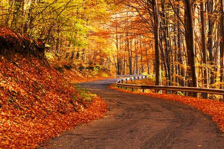 Foto de Autumn scene at the forest - Imagen libre de derechos