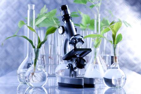 Foto de Seedling laboratory - Imagen libre de derechos