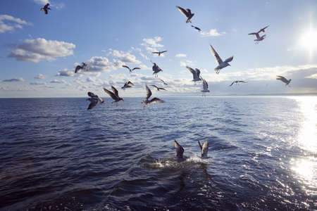 Group of seagull feeding in sea