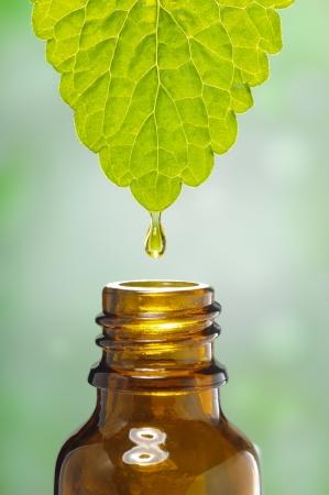 fluid drops down from leaf as symbol for alternative herbal medicine