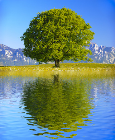 Photo for single big old tree mirroring on water surface - Royalty Free Image