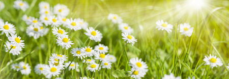Foto de spring meadow with beautiful flowers and sun rays in background - Imagen libre de derechos