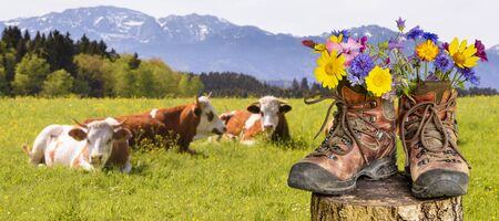 Photo for walking boots with beautiful flowers on trekking tour - Royalty Free Image